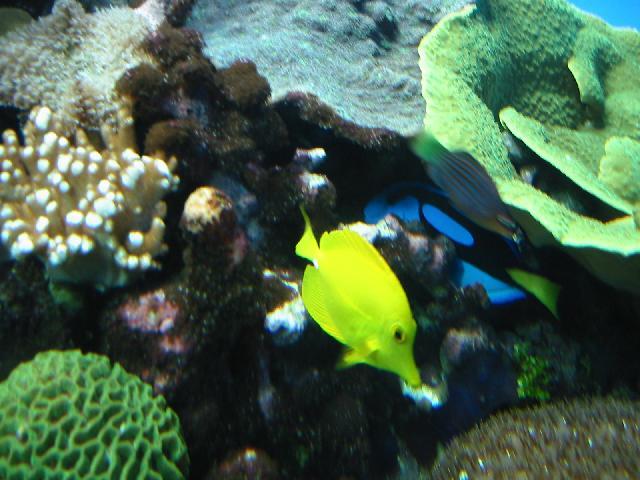 San diego trip birch aquarium for California fish planting